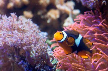 Sea Life Centre Brighton